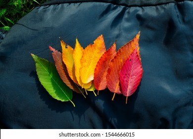 autumn colors composition with leaves from green to red life to death from the tree with green miw orange dark red color rainbow