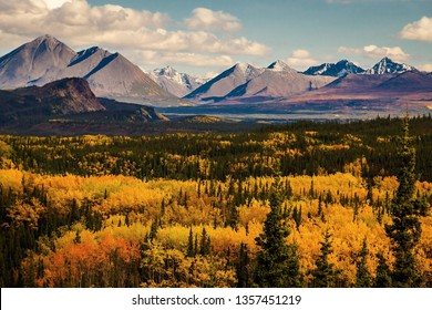 Autumn colors in Denali state and national park in Alaska
