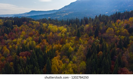 autumn colors in forest aerial view
