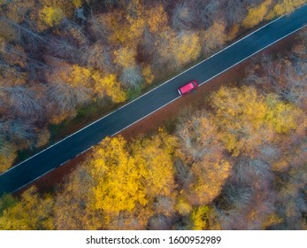 Autumn colors in a forest. In the picture we can see a car in the middle of a colorful forest.