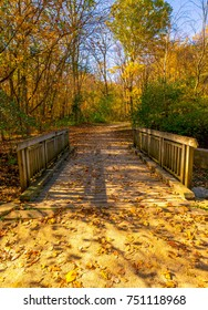 Autumn Colors in the Forest Preserve
