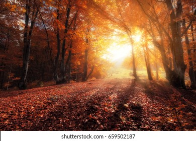 Autumn colors forest at sunny day