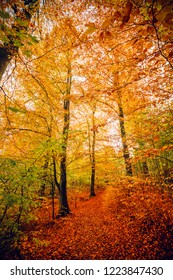 Autumn colors in the forest with trees in yellow and orange tones in the fall
