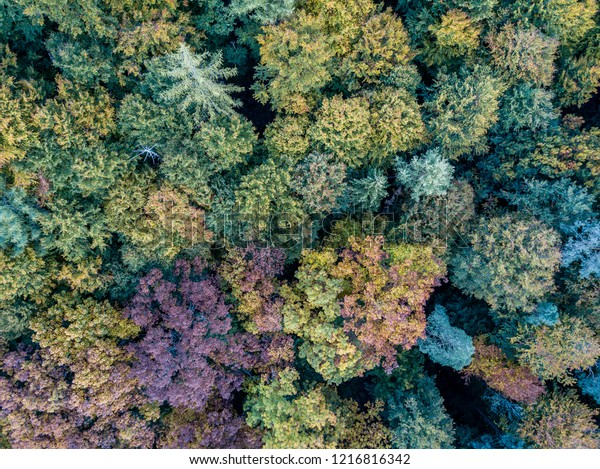 Autumn colors of German woods with different colors of trees shot with a drone