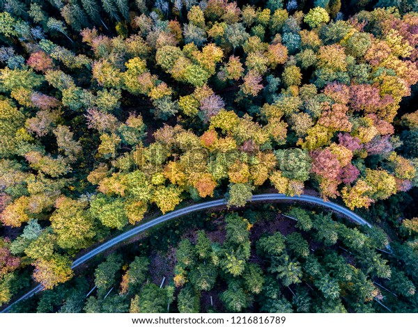 Autumn colors of German woods with different colors of trees divided by a road shot with a drone