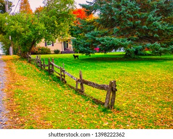 It's autumn, the colors are invigorating. This animal is walking on his land. The wooden fence invokes a rural landscape. Ulverton, Quebec; October 13, 2016.