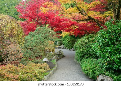 autumn colors of japanese maples in national historical site Butchart Gardens, Vancouver island, British Columbia, Canada