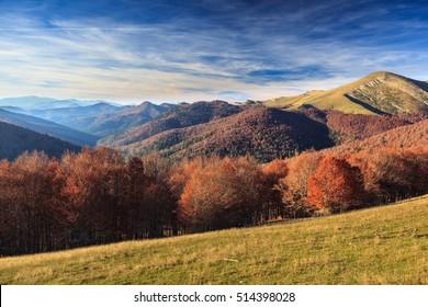 autumn colors. Jungle of Irati. Navarra, Spain