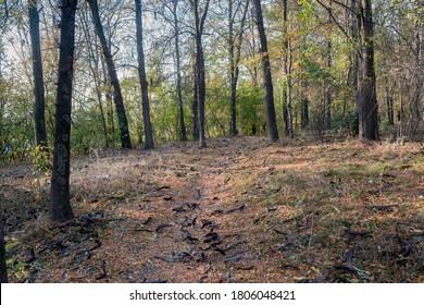 Autumn colors in Kardzhali Prostor city park - Shutterstock ID 1806048421