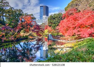 Autumn Colors in Koishikawa Korakuen Garden, Tokyo, Japan