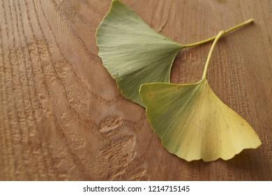 Autumn colors - leaves of Ginkgo biloba, ginkgo, maidenhair tree