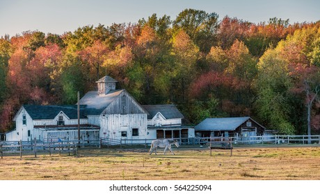 Autumn colors at a Maryland stable with an old rustic barn during Autumn near sunset