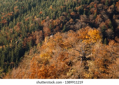 Autumn colors in the mountains in the vicinity of Ilsenburg, Harz