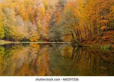autumn colors near lake