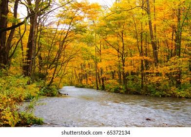 Autumn Colors of Oirase River, located at Aomori Prefecture Japan