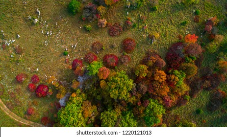Autumn Colors on Karst. Aerial drone image of autumn colored trees in the forest at the sunset.