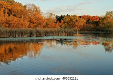 Autumn Colors on Medicine Lake in Plymouth, Minnesota