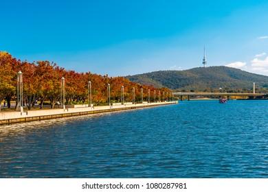Autumn colors on Queen Elizabeth terrace in Canberra, Australia