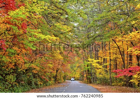 Autumn Colors on a Road in Tallulah Falls Park
