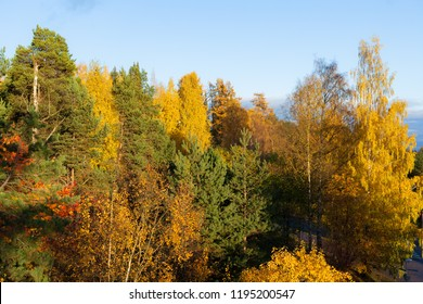 Autumn colors on trees at sunny day background