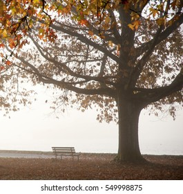Autumn colors and a park bench in Stanley Park, Vancouver, British Columbia, Canada