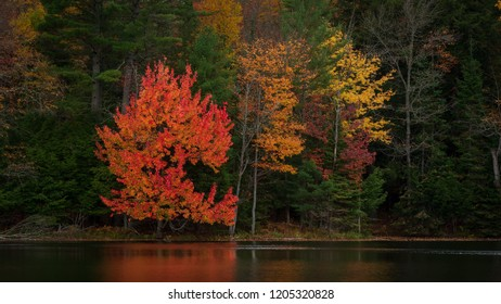 Autumn colors reflected in Church Pond in the Adirondacks, New York