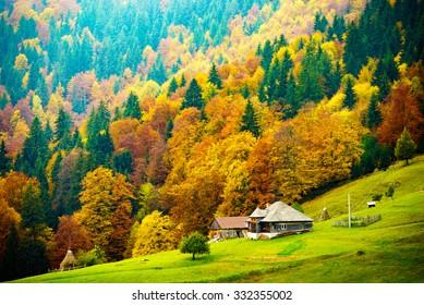 Autumn colors in Rural region of Carpathian Mountains