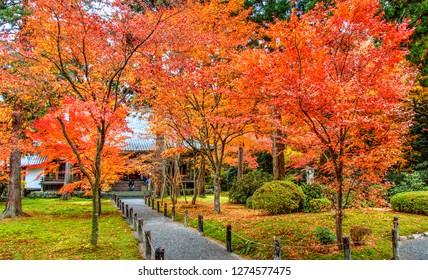 Autumn Colors in Sanzenin Temple, Kyoto, Japan