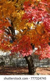 Autumn colors in Seoul