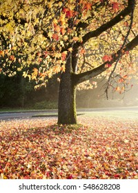 Autumn colors in Stanley Park, Vancouver, British Columbia, Canada