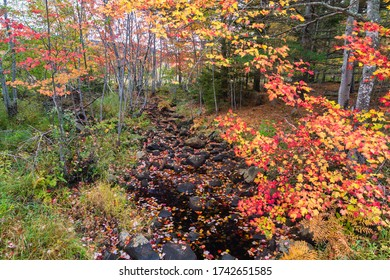 Autumn Colors & Stream on Duck Brook Road in Acadia National Park, Maine