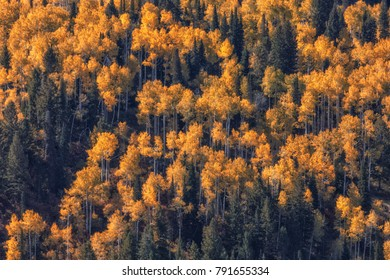 Autumn colors in the Wasatch mountains in Utah.