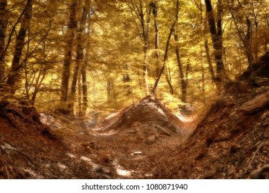 Autumn colors in the woods with rays of Sun through the trees and foliage in foreground, fairytale landscape