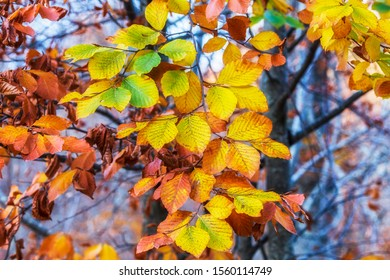 Autumn colors. Yellow, red, orange leaves.