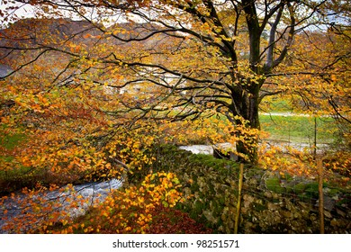 Autumn colors at Yew Tree Farm of Beatrix Potter fame at Hows Tarns, England