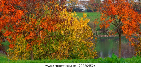 Autumn colors,Colorful leaves on trees,lake in background