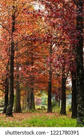 Autumn coloured trees with a small bench for enjoying the solitude