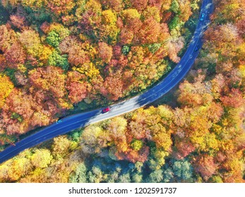 Autumn colours and a curvy road through forest