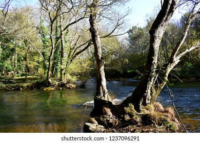 Autumn colours in the forest. Trees and river with green and yellow colours. Galicia, Spain.