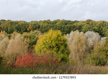 Autumn colours in Highwoods, Colchester, England.