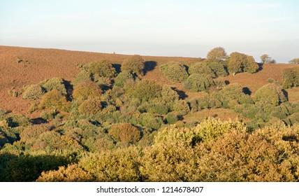 Autumn colours on slopes of Sugar Loaf, Abergavenny, Wales
