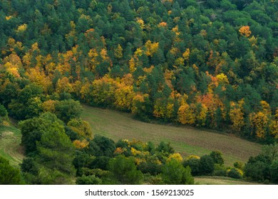 Autumn colours trees panoramic view