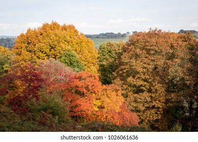 Autumn colours at Winkworth Arboretum in Surrey, UK.