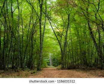 Autumn come back. A view from a forest in Centre Val de Loire France, Loiret.