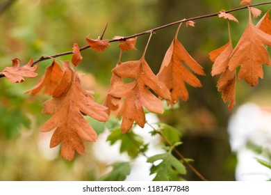 Autumn is comminng