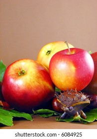 autumn composition from creative series: chestnuts hedgehog and apples