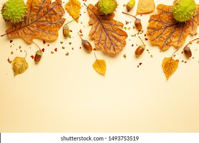 Autumn composition with autumn dried leaves of oak tree, acorn and chestnut on pastel background. Flat lay, copy space.