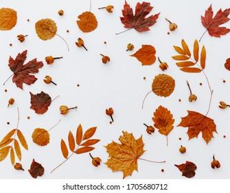 Herbstzusammensetzung getrockneter Blätter auf weißem Hintergrund. Flachlage, Draufsicht.  Nahaufnahme