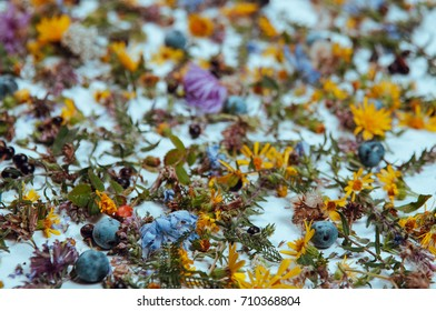 Autumn composition. Frame made of dried flowers and autumn leaves. Top view, flat lay