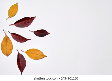 Autumn composition. Frame made of yellow and red leaves on white background. Fall concept. Autumn thanksgiving texture. Flat lay, top view, copy space